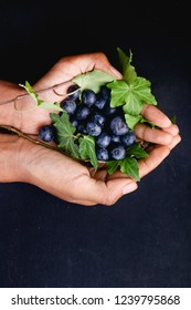 Female hands holding blueberries and leaves above dark background.