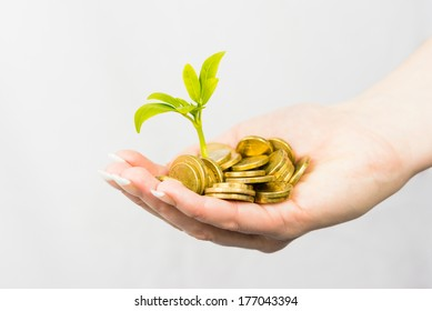 Female hands holding coins and small tree