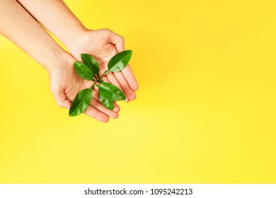 Female hands holding green plant on yellow background. Ecology concept. Place for text.