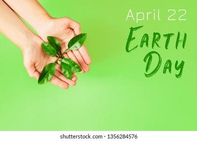 Female hands holding green plant on green background. Ecology concept. Earth day concept.