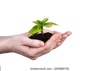 Female hands holding young plant on white background