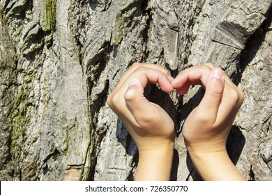 Female hands making an heart shape on a trunk of a tree.