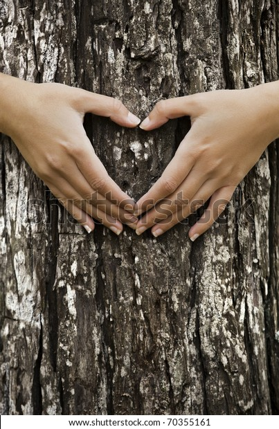 Female hands making an heart shape on a trunk of a tree. Great ecology concept