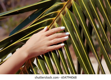 Female hands on palm tree leaf background