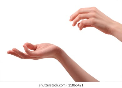Female hands on a white background