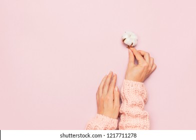 Female hands in pink knitted sweater hold a delicate cotton flower on pink pastel table top view. Flat lay. Copy space. Cotton flowers. Lifestyle gentle background