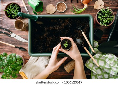 Female hands planting seedlings at home holding garden tools. Hands of girls and little sprouts. Gardening