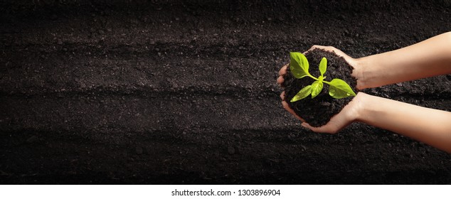 Female Hands Planting Young Plants. Gardening and Vegetable Garden Concept