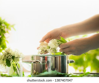 Female hands prepare elderflowers. Healthy elder flowers preparation on table with cooking pot. Homemade elderflower syrup or jam making. Copy space for your recipes. Healthy seasonal natural food