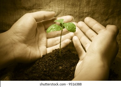 Female hands protecting a new green life. Vintage rural style image. Focus on plant
