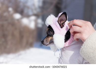 Female hands put a dog in warm clothes