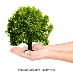 Female hands and tree on the white background