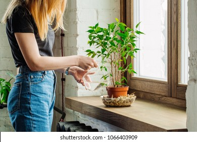 Female hands watering flowers on the window