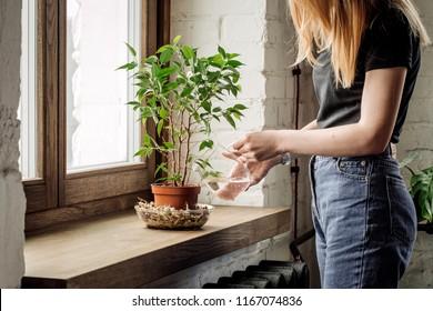 Female hands watering flowers on the window