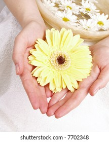 female hands with yellow gerber