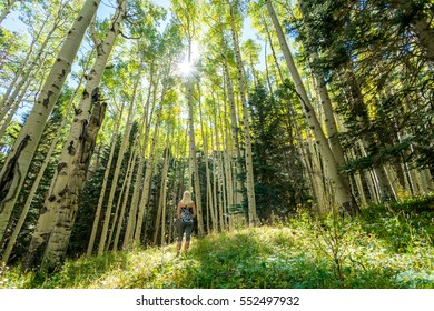 Female Hiker in Nature, Surrounded by Tall Aspen Trees
