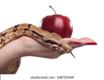 Female holding apple and snake, photographed over white background.