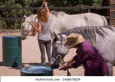 Female horse riders learning how to put the halter properly on a summer day.