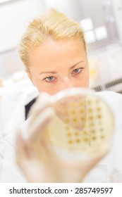 Female life science professional observing cell culture samples on LB agar medium in petri dish.  Scientist grafting bacteria in microbiological analytical laboratory .  Focus on scientist's eye.