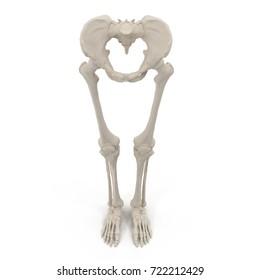 Female Lower Body Skeleton on white. Front view. 3D illustration