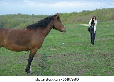 Female making a shot of a brown horse on the meadow