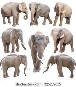 female and male asia elephant isolated on white background
