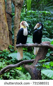 Female and Male wreathed hornbill standing side by side on a tree branch, presenting a loving couple