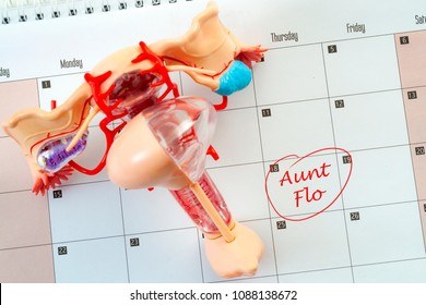 Female menstruation cycle and euphemism for the critical day concept with the woman reproductive system on a calendar with the words aunt flo circled in red marker
