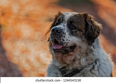 female Moscow Watchdog