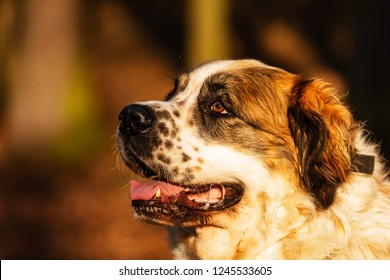 female Moscow watchdog nice portrait