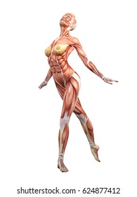 Female muscle anatomy dancing 3D Illustration