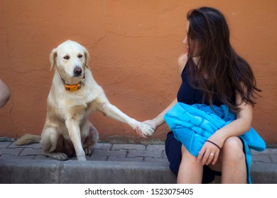 A female person holding a golden retriever dog's paw