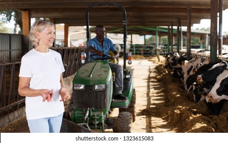 Female proffesional farmer  standing near cow and man sitting at car at  farm
