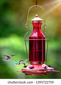 female ruby-throated hummingbirds drinking nectar from a feeder
