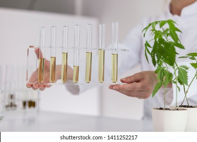 Female scientist holding a glass bowl with cbd oil extracted from a marijuana plant. Healthcare pharmacy from medical cannabis.There is a medical marijuana plant on the table.