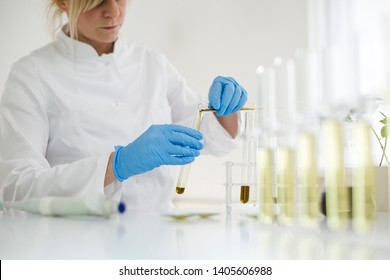 Female scientist in laboratory testing cbd oil extracted from a marijuana plant. She is using a various glass tubes and bowls for the experiment. Healthcare pharmacy from medical cannabis.