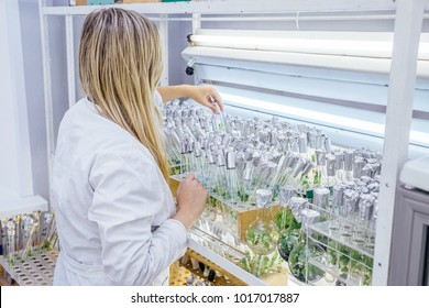 Female scientist in white robe examines  test tubes with in vitro cloned microplants in a nutrient medium