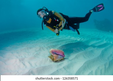 Female scuba diver and a beautiful conch shell on a sandy seabed in the Bahamas