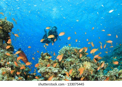 Female Scuba Diver explores coral reef