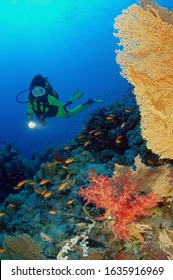 female scuba diver looking at the heathy colourful coral reef