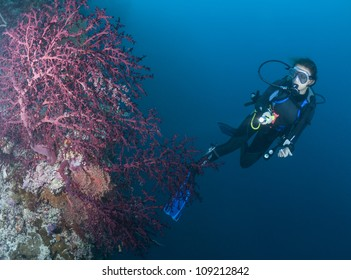 Female SCUBA Diver and purple sea fan.