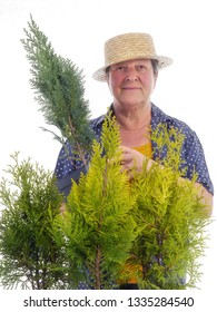 Female senior gardener wearing straw hat posing with bunch of young thuja trees on white