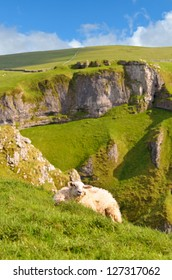 Female Sheep above Winnats Pass in the Peak District National Park