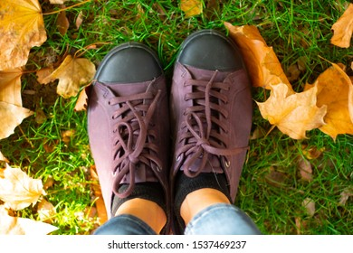 Female shoes close-up on green grass with autumn yellow maple leaves for a walk in the park from top to bottom, view of the legs