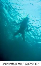 female snorkeler photo taken from underwater