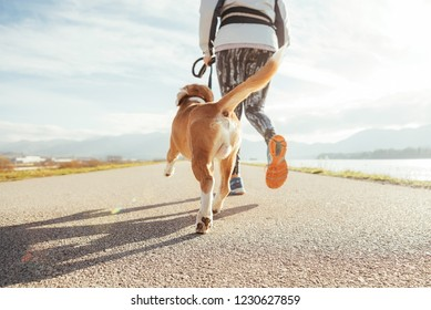 Female starting the morning jogging  with his beagle dog by the asphalt running track. Bright sunny Morning Canicross exercises. Close up legs image