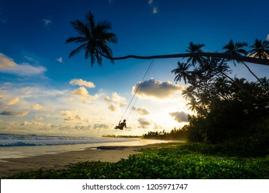 A female tourist is enjoying sunset on a palm swing in Sri Lanka. Palm swings are popular attractions around Dalawella and Dickwella beaches