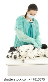 Female vet in protective, medical mask with dog in surgery