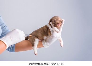Female vet Vaccinating puppies