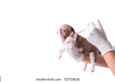 Female vet Vaccination in puppies isolated white background.